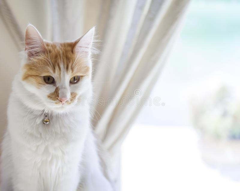 Domestic Cat . Close-up  Isolated. Feline  sitting on side of  windowsill  looking . Stock Image stock photography