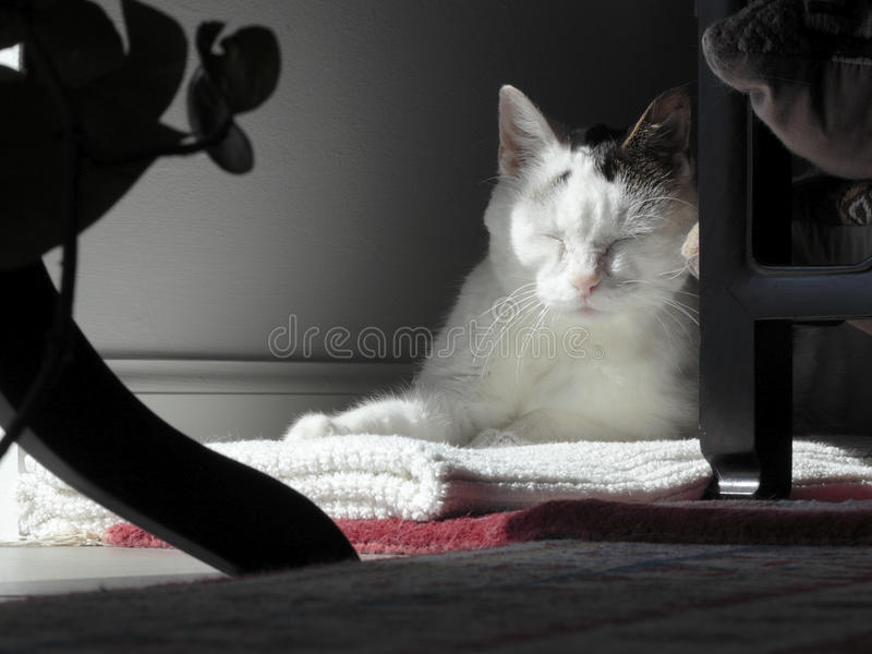 Download Kitty Cat Sleeping In A Quiet Corner Stock Photo - Image of closed, closeup: 93880930