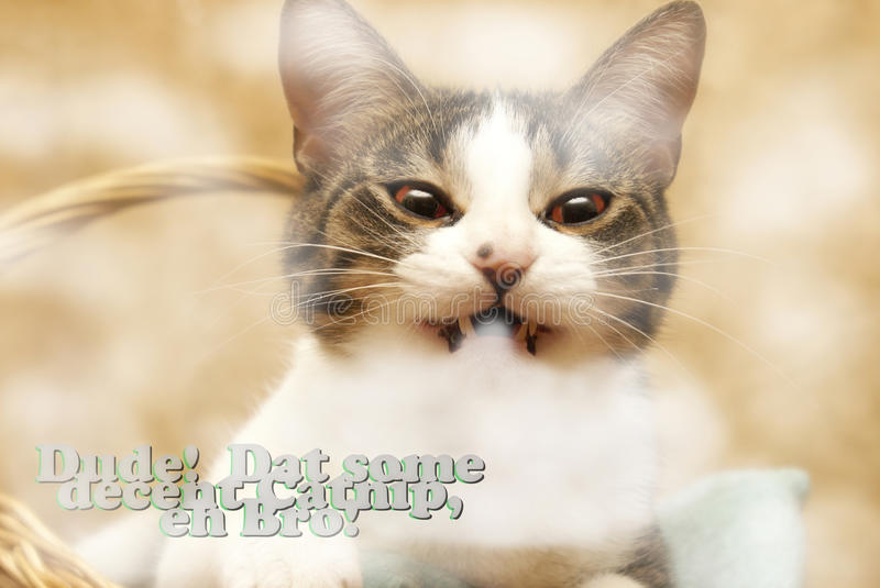 Kitty Catnip Madness. This kitty takes catnip to a whole new level stock images