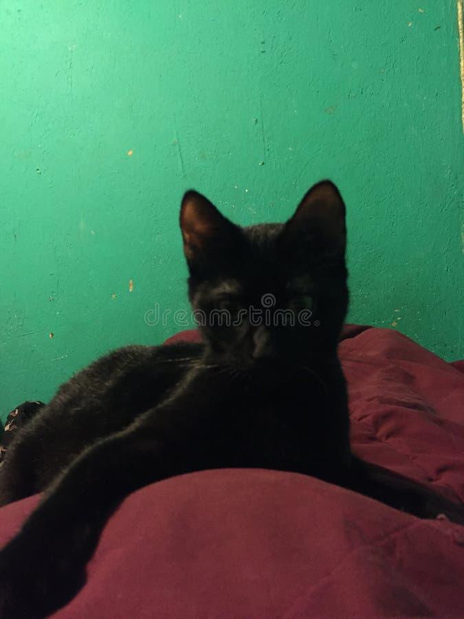 Kitty che vi esamina fotografia stock libera da diritti