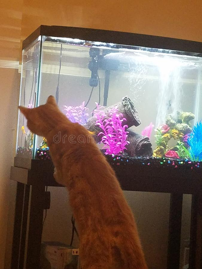 Kitty Curiosity. Fish, tank, swim stock photos
