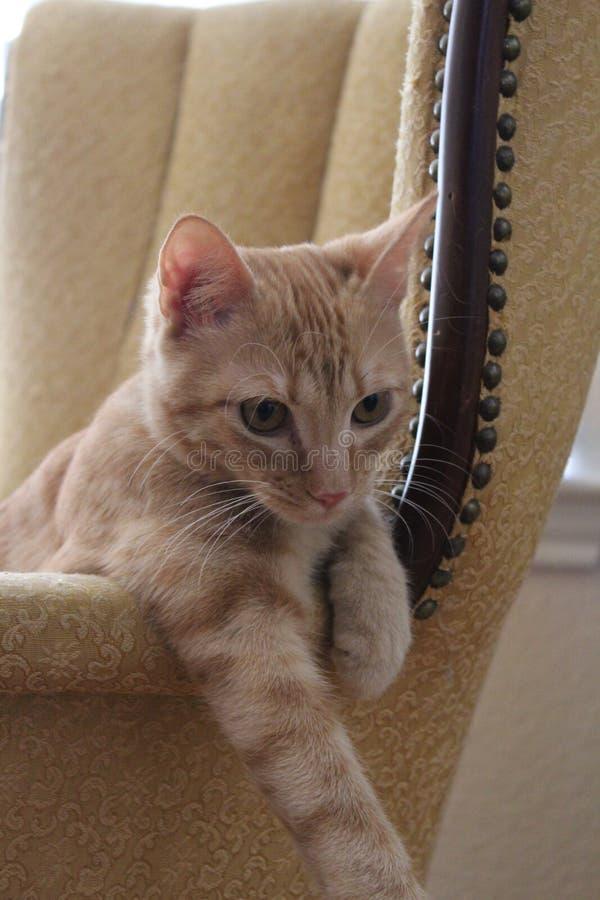Kitty curioso fotografia stock libera da diritti