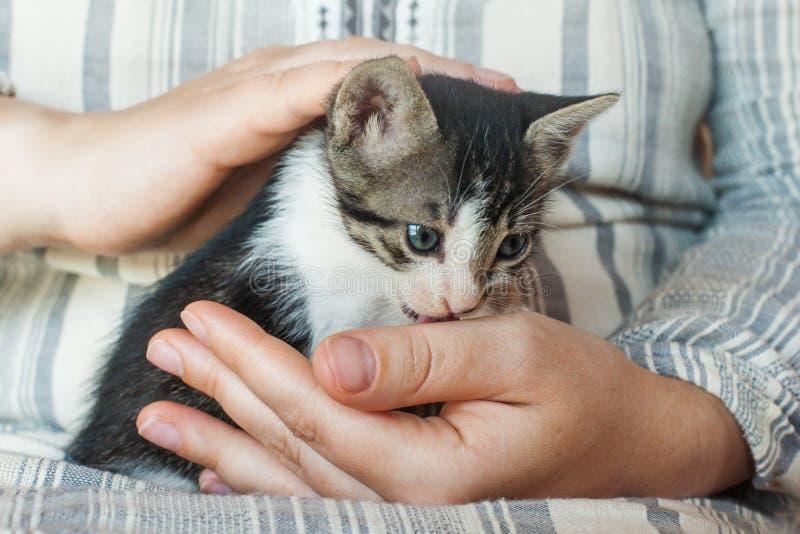 Kitty dans des mains Fermez-vous du petit chat mignon dans des mains femelles photo stock