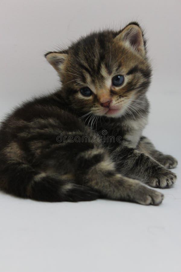 Kitty dopo il gioco con la mamma adorabile del gatto immagine stock