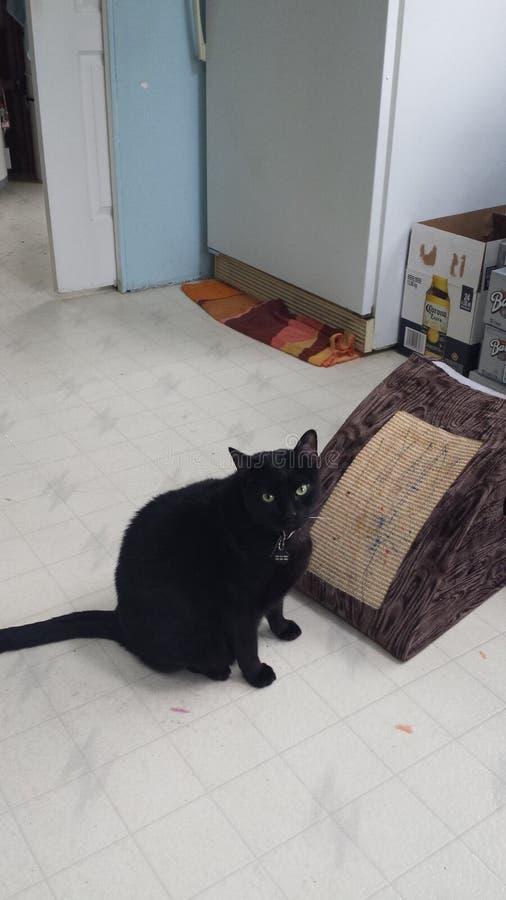 Kitty e la sua casa immagine stock libera da diritti