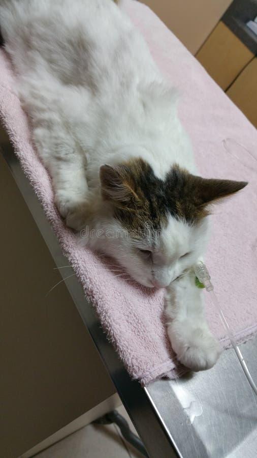 Kitty en la paz fotografía de archivo