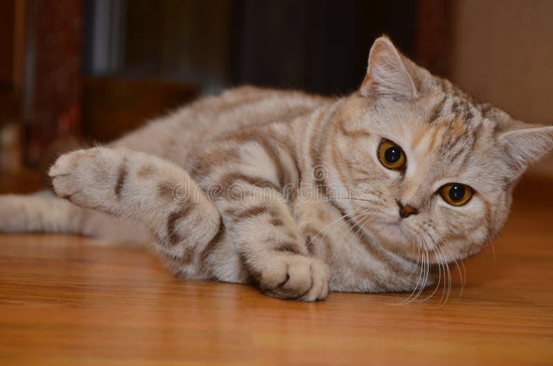 Kitty es imagenes de archivo
