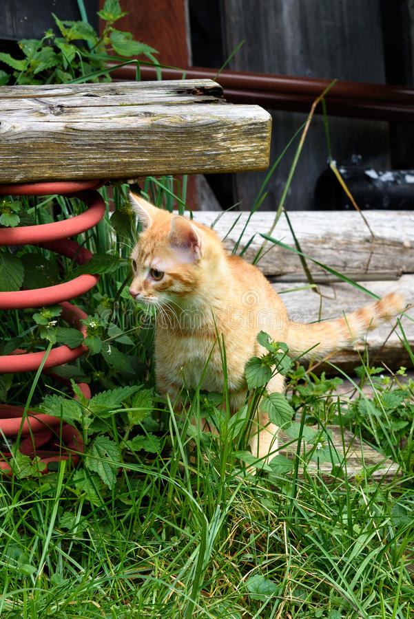 Kitty on a farm. A young, white-brown cat amongst green plants on a farm, a large red spring blocks of wood are at the side, above and behind the kitten stock photo