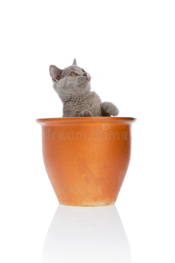Kitty in a flower pot royalty free stock photo