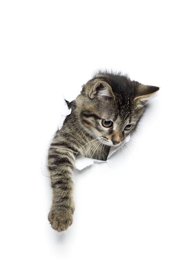 Kitty in foro fotografie stock libere da diritti