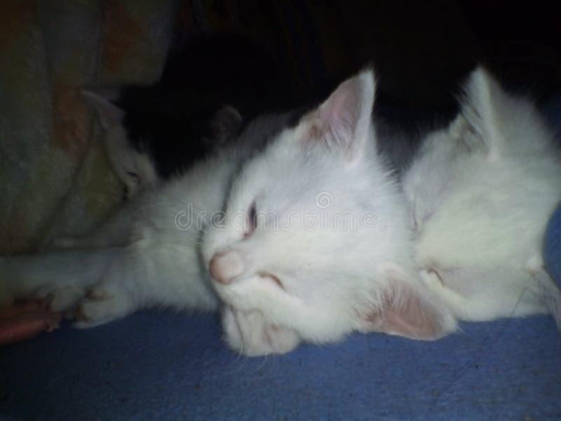 Kitty& x27; gato de s imágenes de archivo libres de regalías