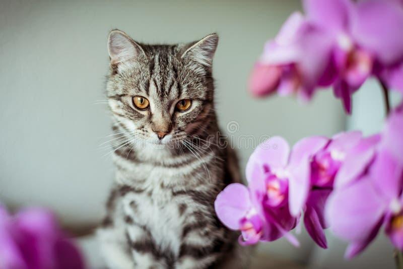 kitty Gestreifte graue Katze Cat Head Porträt Baleengesicht stockfoto