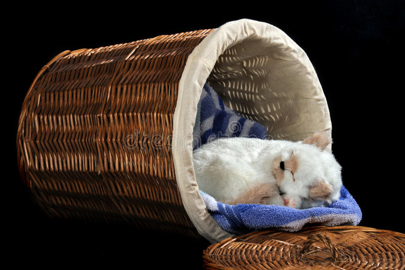Kitty in the Hamper. An adorable white kitty sleeping on a towel in a tipped-over wicker hamper. Isolated on black royalty free stock photo