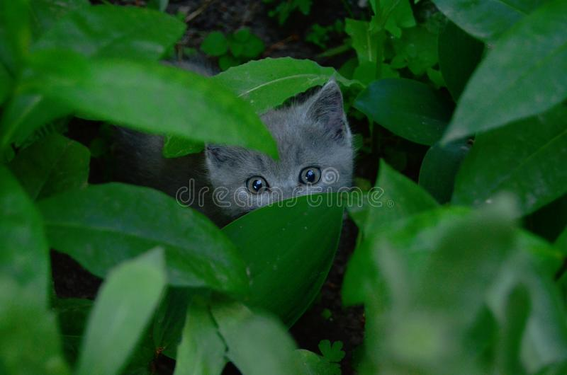 Kitty hide and seek game royalty free stock photography