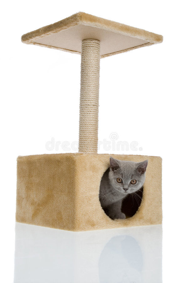 Kitty in his home royalty free stock photography