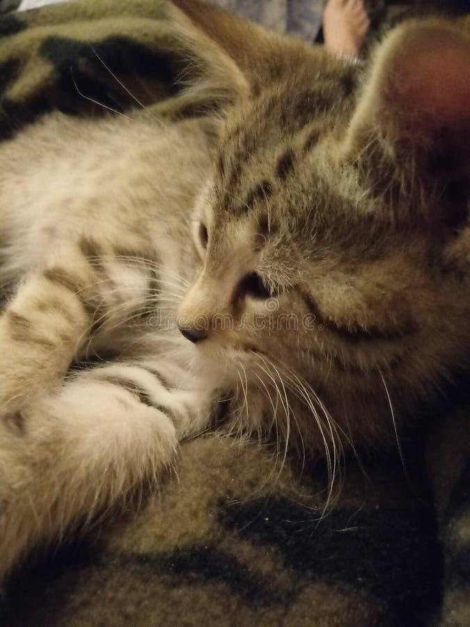 kitty royalty-vrije stock afbeeldingen