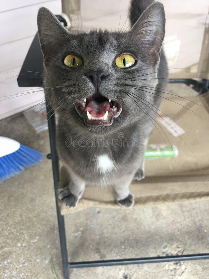 Kitty Jade arkivfoton