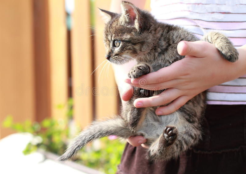 Download Kitty in kids hands stock image. Image of small, hands - 25293059