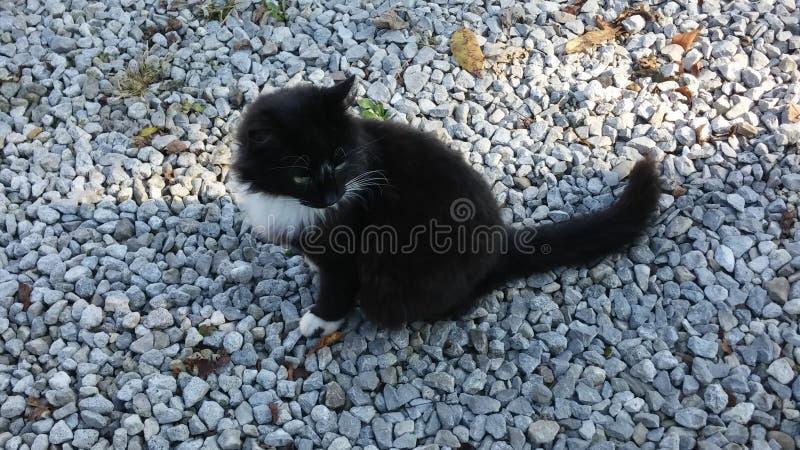 Kitty kitty royalty free stock image