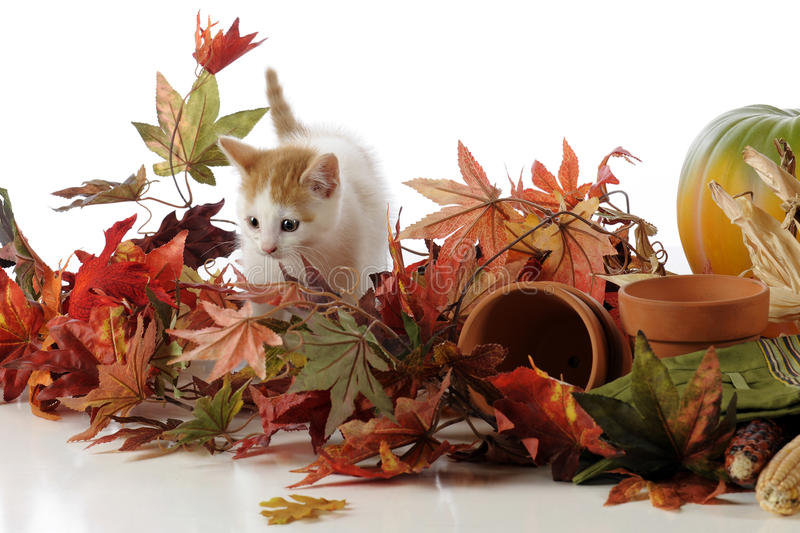 Kitty Among Leaves Stock Images