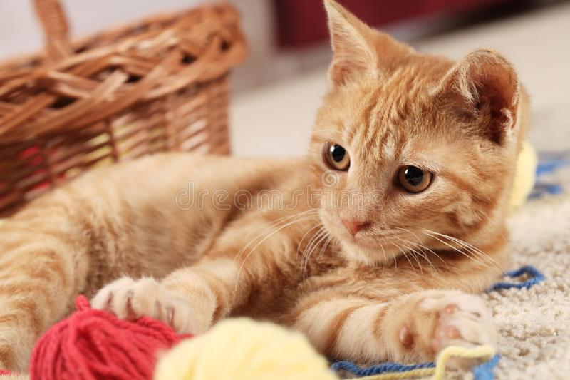 Kitty royalty free stock images