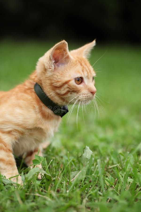 Download Kitty stock image. Image of small, cats, outdoors, cute - 32331123