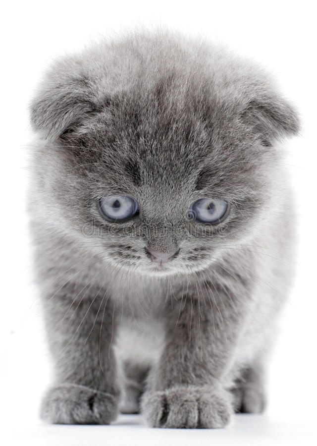 Download Kitty Look To Down Royalty Free Stock Photography - Image: 10141607