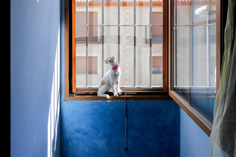 Kitty looking through the grating window royalty free stock image
