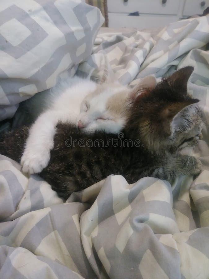 Kitty love stock image