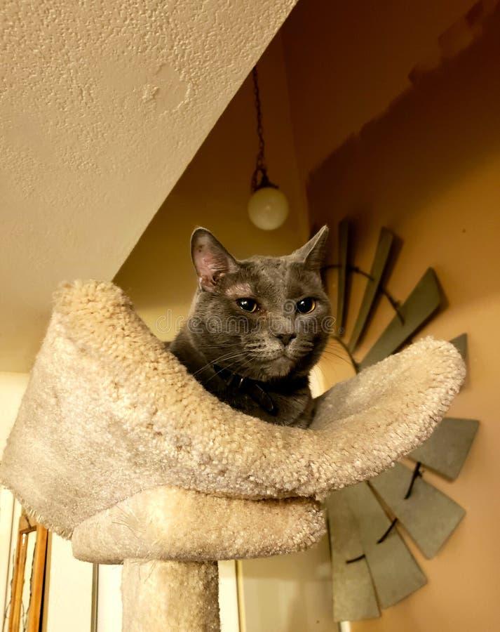 Kitty majestueux photo stock