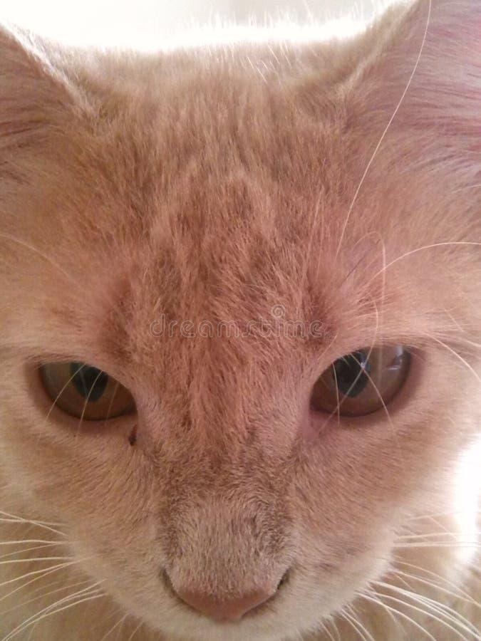 Kitty modelo imagens de stock