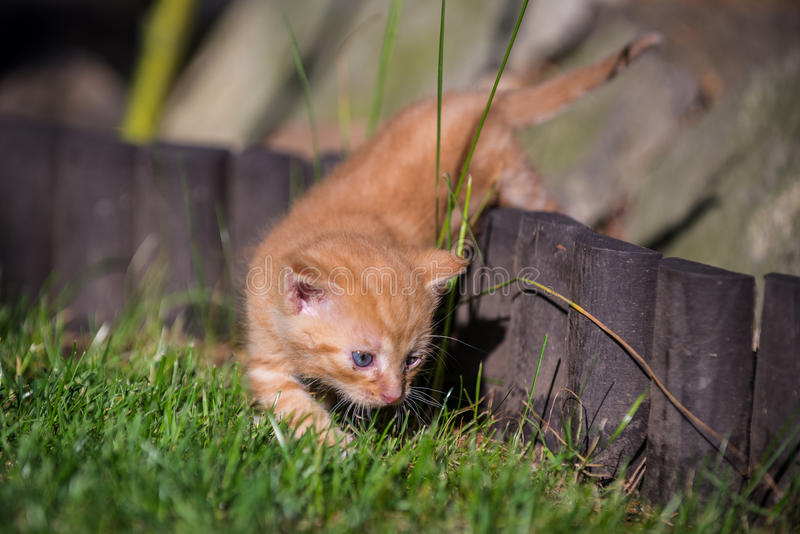 Kitty playing on grass stock photo