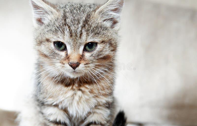 Kitty Portrait Closeup fotografía de archivo libre de regalías