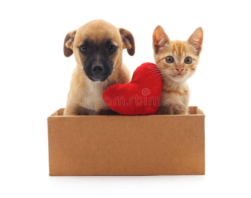 Kitty and puppy in the box. Kitty and puppy in the box on a white background stock photography