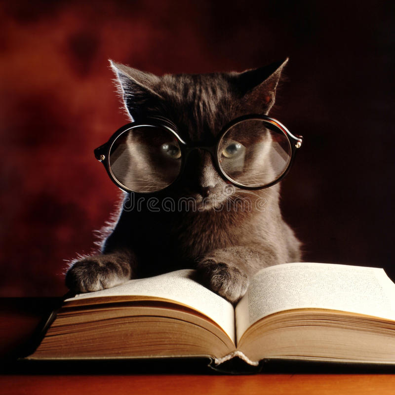 Kitty reading a book stock photos
