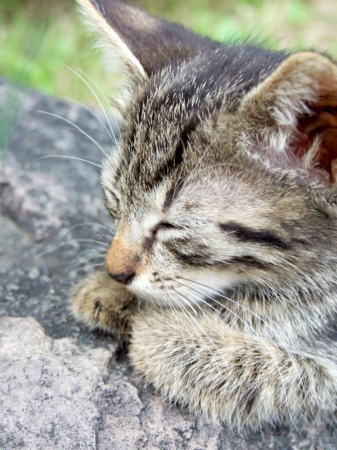 Download Kitty on rock stock image. Image of head, portrait, kitty - 15030399