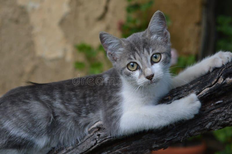 Kitty rurale fotografie stock