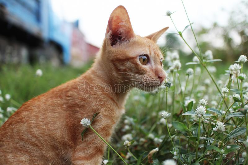 Kitty sits in the wild flower field. royalty free stock photos