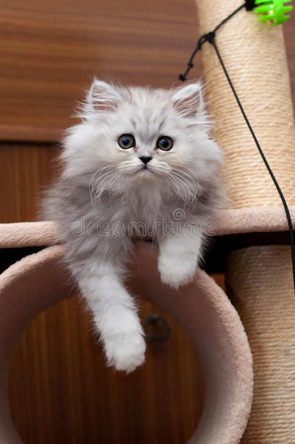 Kitty sitting on the cat house stock photos