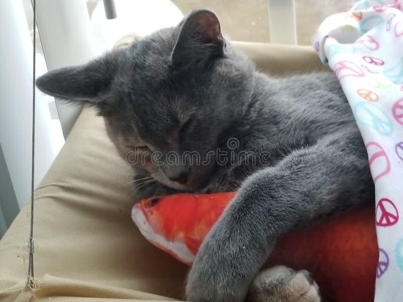 Kitty soñoliento fotos de archivo