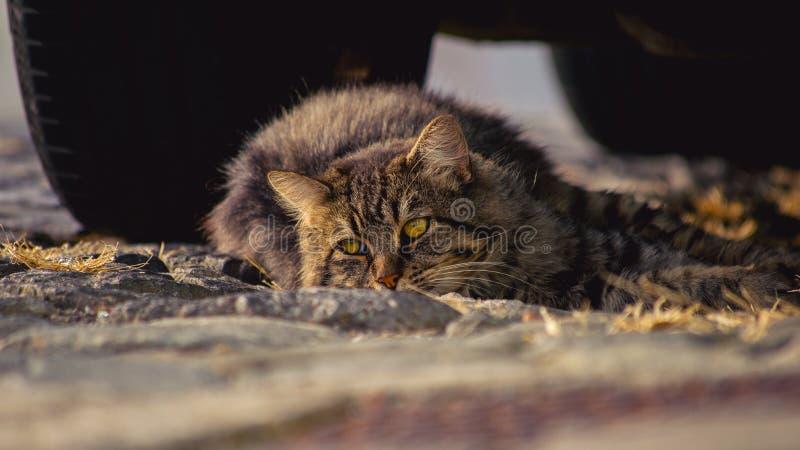 Kitty soñoliento imágenes de archivo libres de regalías