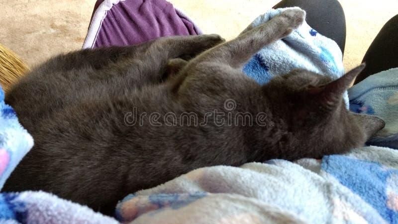 Kitty soñoliento imagenes de archivo