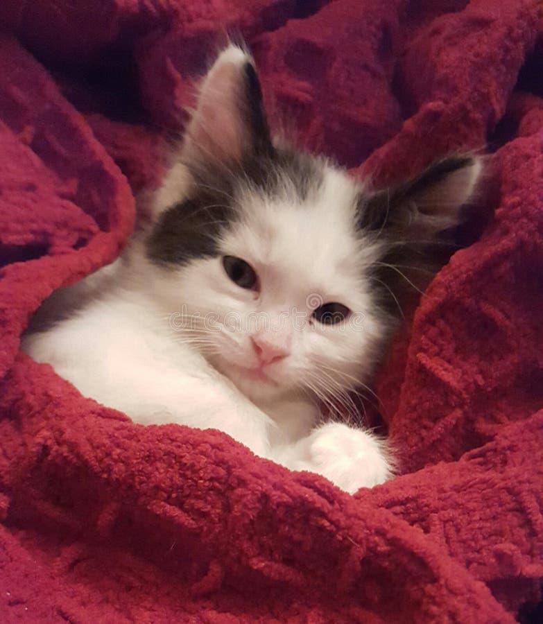 Kitty somnolent photographie stock