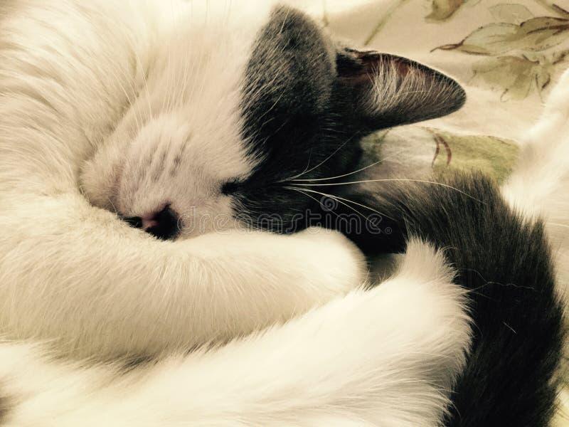 Kitty somnolent photo libre de droits