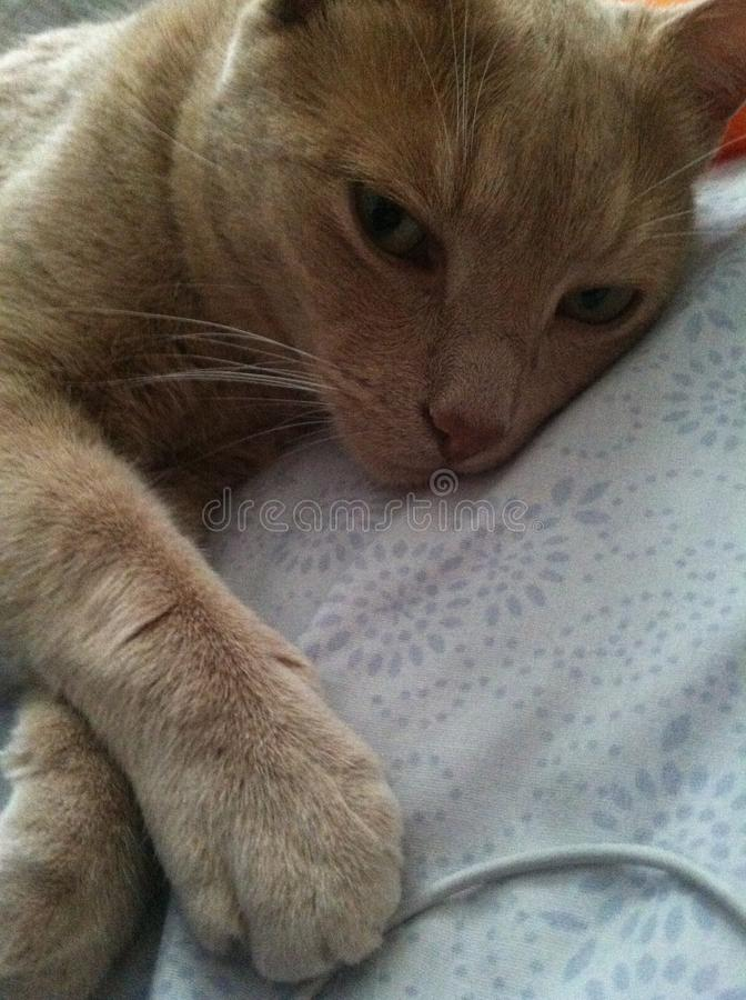 Kitty sonnolento immagini stock libere da diritti