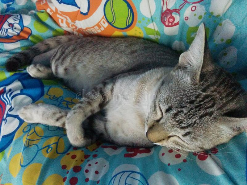 Kitty sonnolento immagine stock