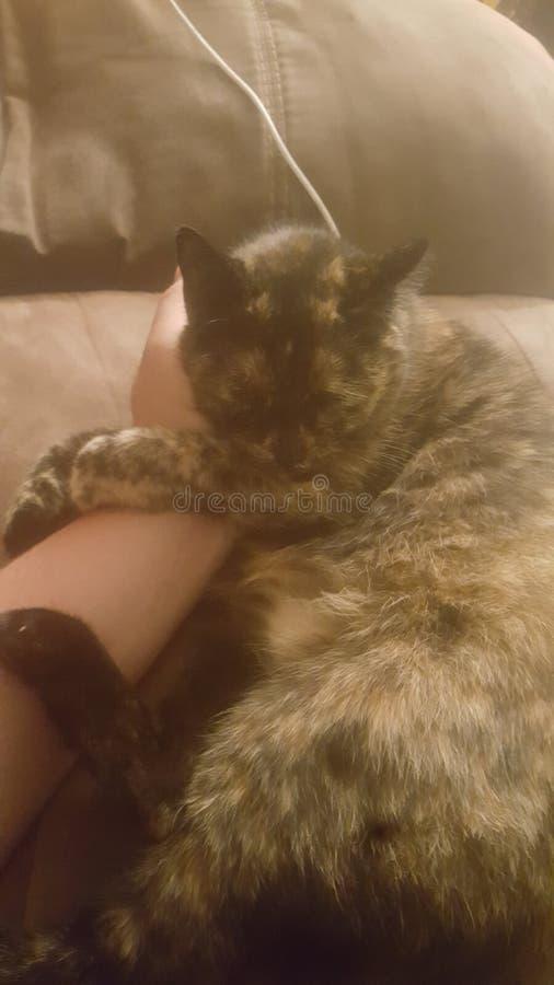 Kitty sonnolento fotografia stock libera da diritti