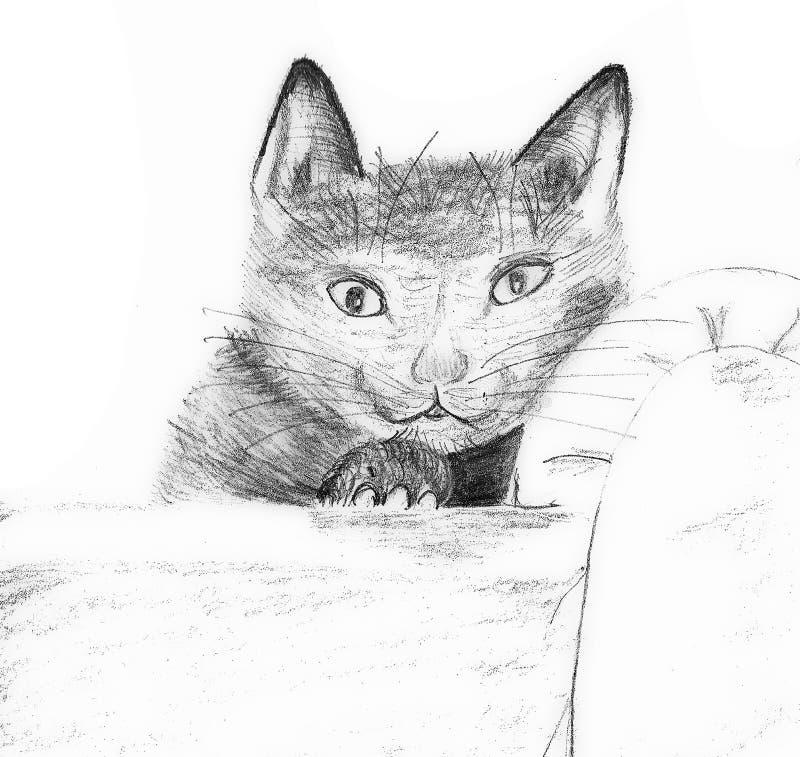 Kitty sullo strato fotografia stock
