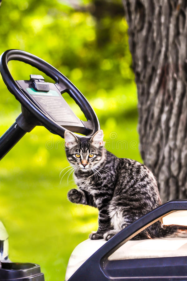 Kitty sur un art de golf photographie stock