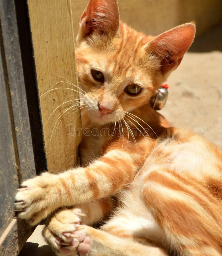 kitty sweet zdjęcie royalty free